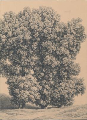 die-zeichnungen-und-aquarelle-des-19-jahrhunderts-in-der-graphischen-sammlung-der-staatsgalerie-stu