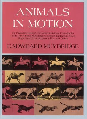 animals-in-motion-by-eadweard-muybridge