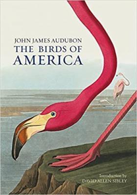 the-birds-of-america